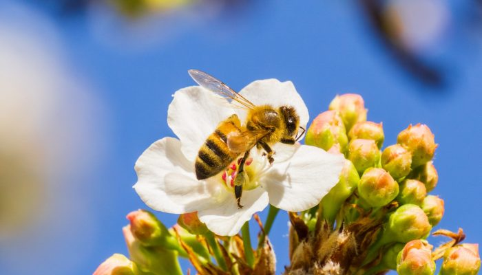 Welcoming Bees to Your Outdoor Space